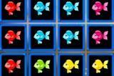 1010 ribjih blokov